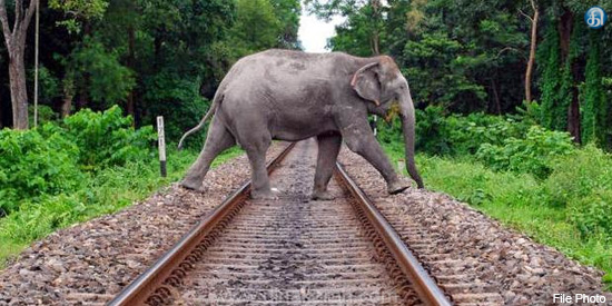 Sound of bees to keep elephants off West Bengal railway tracks