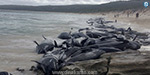 150 whales sealed in Australia are dead: wildlife welfare activists in shock