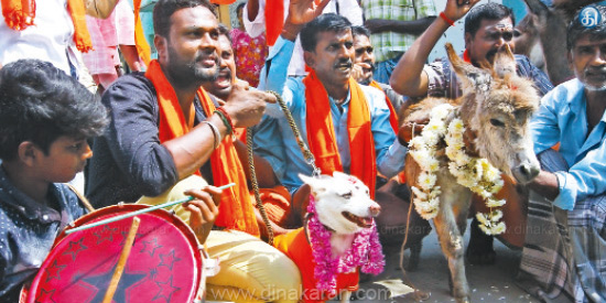 7 people arrested for donkey-dog marrying Valentine's Day