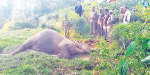 Who killed 'Valparai Singarai'?
