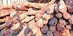 Auction 2,400 tonnes of auction was seized in Andhra Pradesh