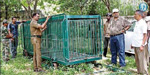 cage to catch tiger in the garden near  Anaimalai