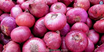 The first phase of 250 tonnes of onions through government institutions came to Mumbai: 1,750 tons by the end of this month will come