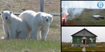 Polar bears lay siege to researchers in the Arctic Sea