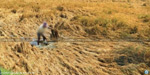 Farmers Increasing the amount of the loss of natural disaster: Central Government announcement