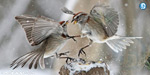World Sparrows Day today
