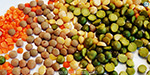 Lentil prices upwards: in one month rose up to Rs 50 per kg
