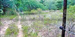 electric fences for 3 km from the village of elephants uttamalai Solar range erection