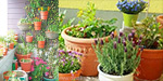 The beauty of the home's balcony gardening
