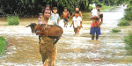 Heavy rain hit normal life in Nothern States: 113 dead in rain