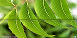 Today is a day of lost patent neem