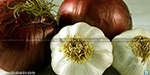 Onion, garlic can kill bacterias: ancestor invention; Scientists Surprise