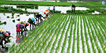 Otherwise, the 30-day hunger strike in Delhi Agricultural Debt Waiver: Farmers Announcement