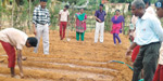 Government nutritional vegetable gardening in schools