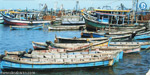 Without compensation from the state of Andhra fishermen who have been haunted for 10 months