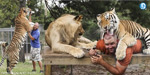 Florida Man Lives With 14 Big Cats Including Lions And Tigers