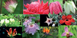 Flowers of the world's top 10 Phenomena