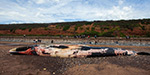 Badly decomposed body of a huge 50ft long fin whale washes up on a Devon beach