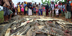 Mob Slaughters Hundreds Of Crocodiles In Indonesia