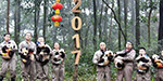 Eight pandas babies wish you a Happy Chinese New Year