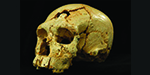 Is this the world's oldest MURDER case? 430,000-year-old skull was discovered