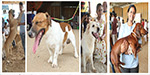 All India Dog Exhibition held on behalf of Kennel Club: Participation of different types of dogs