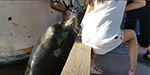 Horrifying moment a sea lion GRABS a young girl from a pier with its mouth and drags her into the water