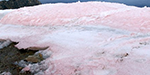Strawberry snow' could supercharge climate change: Researchers find colourful algae boosts melting of Arctic glaciers