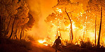 Spain forest fires: Thousands of people evacuated, wildlife threatened