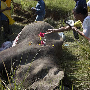 2 Asian elephants killed in high speed train in Assam