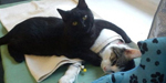 Abandoned black cat who cuddles other sick strays back to health at an animal shelter