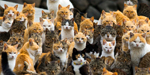 Cat making empire out with CAT ISLAND - incredible pics