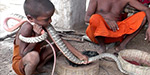 Snake with a face on its back is star of Indian village where children learn to charm cobras from the age of two