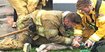 Incredible moment firefighters resuscitate a dog found without a pulse in a burning apartment building as its tearful owner watches on
