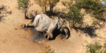 More than 300 elephants die after drinking poisonous water in Botswana, South Africa: Researchers shocked .. !!
