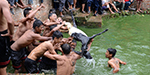 Shocking pictures show teams of men struggle to rip apart live goats