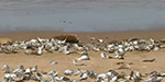 Hundreds of thousands of dead fish wash up on the shores of New Jersey after hot weather