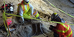 Tusk, teeth, and skull of ancient elephants discovered during construction of Los Angeles Metro line