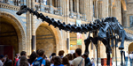 85 feet dinosaur skeletons going to be removed from Museum of London