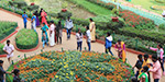 People gathered at Ooty and kodaikanal flower garden