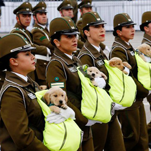 puppies_formation12345