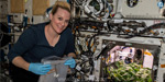 NASA scientists successfully grow radishes at the International Space Station without gravity !: Photos