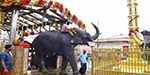 Arattu festival at Sabarimala Opener: elephant came with irumuti