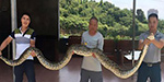 Chinese villagers catch 14 foot long python as it tries to swallow a live goat whole