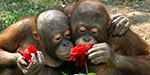 Animals sniffing spring flowers - incredible images