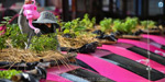 Taxis turned into vegetable gardens in Thailand !: Attakasa photo