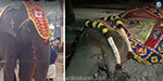 Thiruvannamalai Annamalaiyar temple was killed by elephant health
