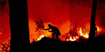 Forest fire in Uttarkhand destroys forest areas
