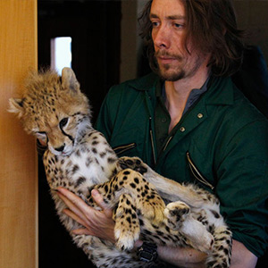 Doctors who treat pain in the face of wild animals