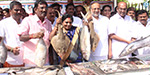 World Fishermen Day: A fisheries festival held by the Bharatiya Janata Party fishermen in Chennai
